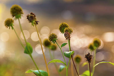 Photograph - Seedheads by Mark Mille