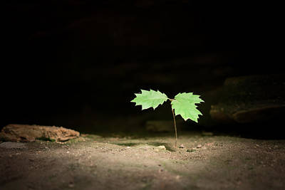 Photograph - Seedling by Scott Rackers
