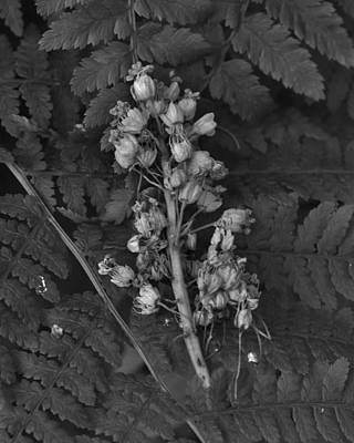Photograph - Seedpods And Ferns by Charles Lucas