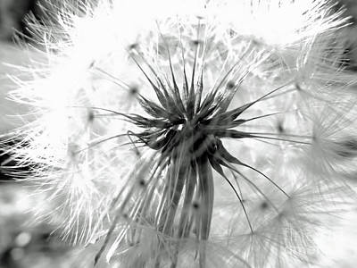 Photograph - Seeds In Black And White by D Hackett