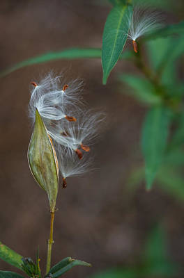 Photograph - Seeds by Jane Luxton
