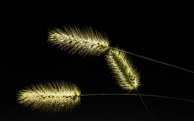 Photograph - Seeds Of Life by Christopher L Thomley