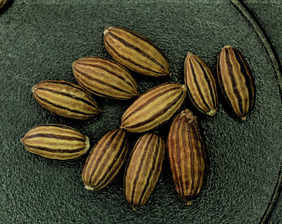 Photograph - Seeds Of The Russian Olive by Scott Carlton