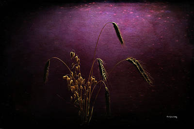 Photograph - Seeds Of Time by Randi Grace Nilsberg