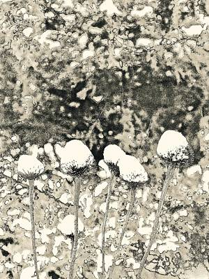 Photograph - Seeds Of Winter by Tim Good