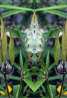 Photograph - Seeds Pareidolia by Constantine Gregory