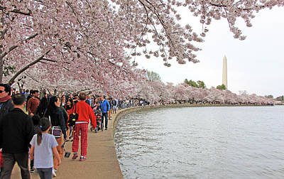 Design Turnpike Vintage Maps - Seeing Cherry Blossoms Along The Tidal Basin by Cora Wandel
