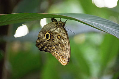 Photograph - Seeing Eye Butterfly by Michael Bessler
