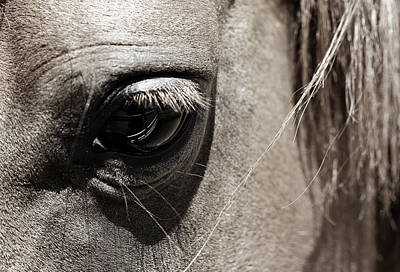 Stillness In The Eye Of A Horse Art Print by Marilyn Hunt