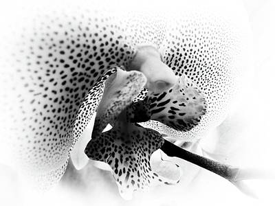 Photograph - Seeing Spots by Karen Stahlros
