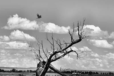Photograph - Seeker by Jacqui Binford-Bell