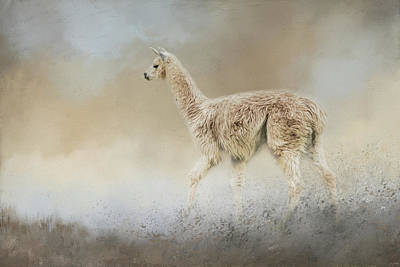 Llama Photograph - Seeking by Jai Johnson