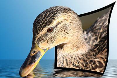 Birds Photograph - Seeking Water by Shane Bechler
