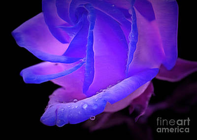 Purple Floral Photograph - Seeking Your Heart by Krissy Katsimbras