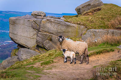 Farmanimals Photograph - Seep And Lamb by Mariusz Talarek