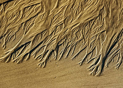 Photograph - Seeping Sand by Robert Potts