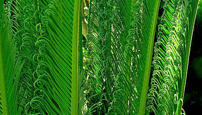 Photograph - Sego Palm by James Temple