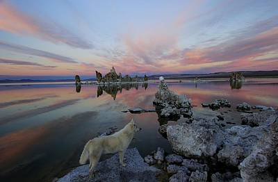 Photograph - Sekani On Tufa by Sean Sarsfield