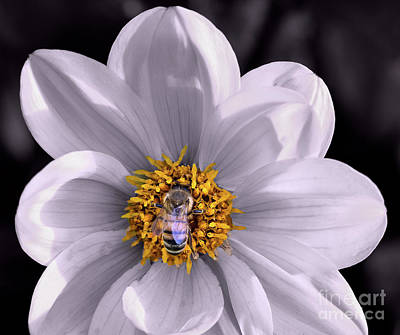 Photograph - Selective Color With A Bee by Vyacheslav Isaev