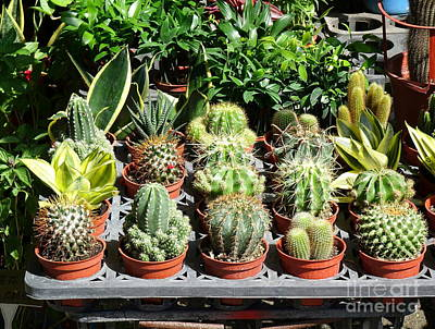 Photograph - Selling Cactuses At The Flower Market by Yali Shi