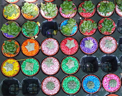 Photograph - Selling Cactuses In Small Pots by Yali Shi