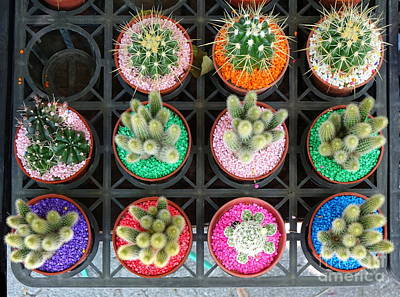 Photograph - Selling Cactuses With Colorful Stones by Yali Shi