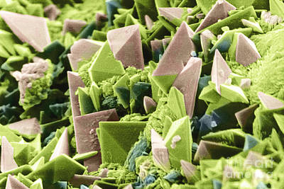 Calcium Oxalate Photograph - Sem Of Kidney Stone by Scimat