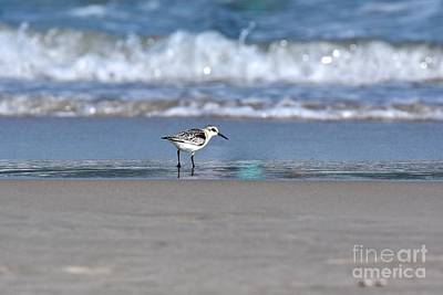 Edward Hopper - Semipalmated sandpiper among the waves by JL Images