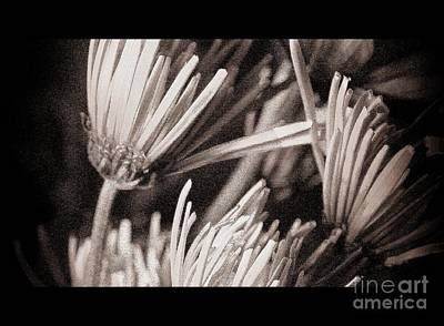 Photograph - Send Me These by Julie Lueders
