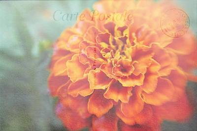 Photograph - Send With Love by Diane Alexander