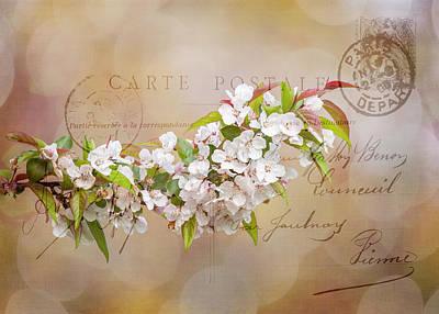 Photograph - Sending Spring by Cathy Kovarik