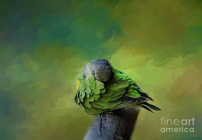Photograph - Senegal Parrot by Eva Lechner
