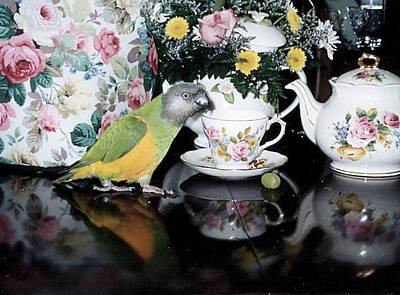 Photograph - Senegal Parrot Tea Party by Jeanne Kay Juhos