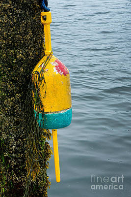 Photograph - Senior Buoy   by Olivier Le Queinec