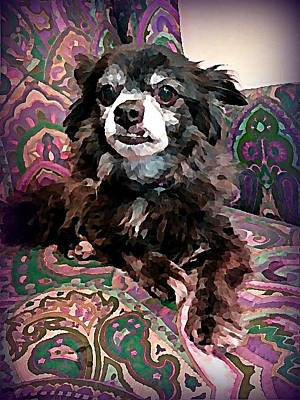Pet Wall Art - Digital Art - Senior Chi by Raven Hannah