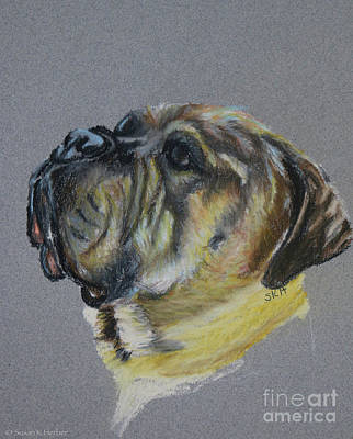 Pastel - Senior Mastiff by Susan Herber