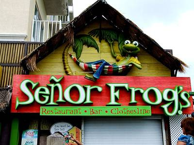 Photograph - Senor Frogs by Michiale Schneider