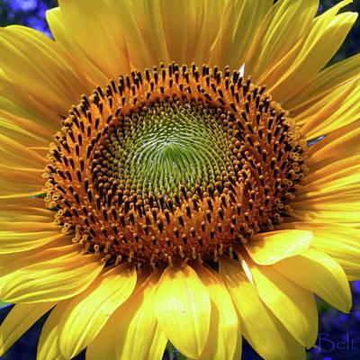 Sensational Sunflower Art Print by Christine Belt