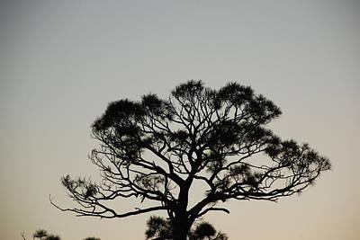 Cactus - Senset Trees by Rob Hans