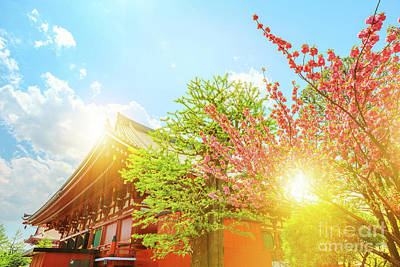 Photograph - Senso Ji With Cherry Blossom by Benny Marty