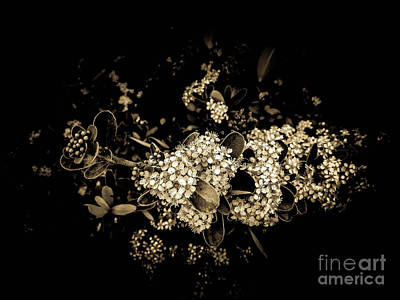 Photograph - Sentimental Air by Fei Alexander