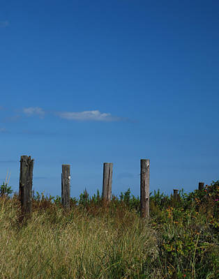 Photograph - Sentinals by Mark Wiley