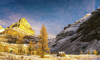 Photograph - Sentinel Pass Golden Larches Canadian Rockies by Mike Reid