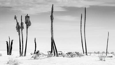 Photograph - Sentinels Of The Salton Sea by Jim DeLillo