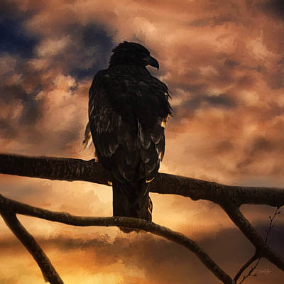 Photograph - Sentry - Eagle Art by Jordan Blackstone