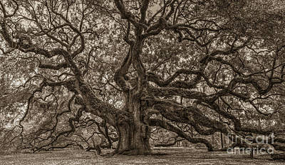 Photograph - Sepia Angel Oak Mod by Dale Powell