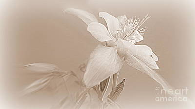 Photograph - Sepia Columbine Flower by Kay Novy