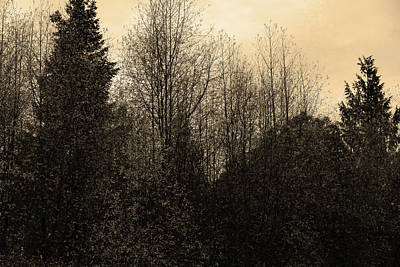Photograph - Sepia Forest by Laurel Powell