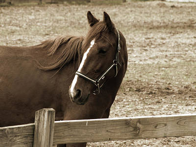 Photograph - Sepia Horse by Scott Hovind