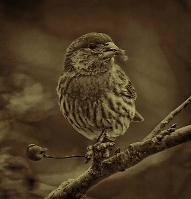 Photograph - Sepia House Finch by Dale Kauzlaric